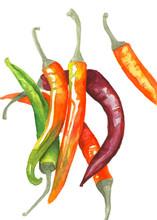Multi-colored Watercolor Chili Peppers