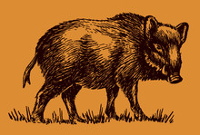 Male Wild Boar, Sus Scrofa In Side View Isolated On An Orange-brown Background. Editable In Layers