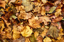 Dead Leaves Shot Ideal For Backgrounds