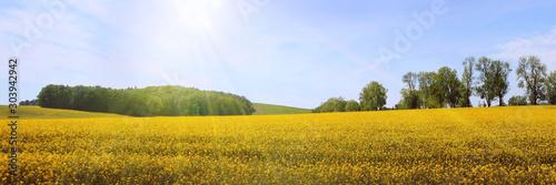 Fond de hotte en verre imprimé Melon Frühsommerliche Sonne über weiter Landschaft, Rügen, Panorama