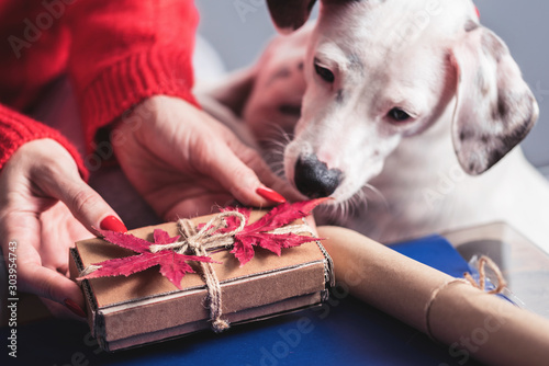 Foto op Plexiglas Hond Beautiful cardboard decorative box