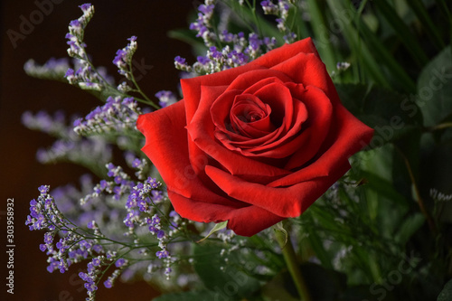 Blooming Red Rose with Purple Flowers