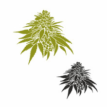 Cannabis Marijuana Cannabis Bud Medical Vector Cone