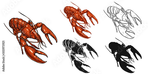 Set of lobster by hand drawing Canvas Print