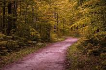 Winding Forest Path Walkway Ontario, Canada, Crawford Lake, Autumn Fall