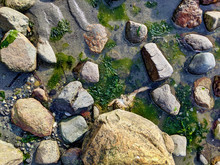 Deceased Crab Carcass Hidden In The Rocky Coastline At False Bay On San Juan Island.