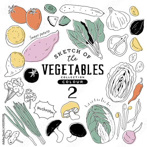 Fototapeta オシャレな手描き野菜セット02/カラフル obraz