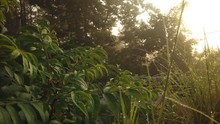Closeup Dewy Grass At Sunrise, Bright Sun Peering Through Trees, Slow Panning 4k