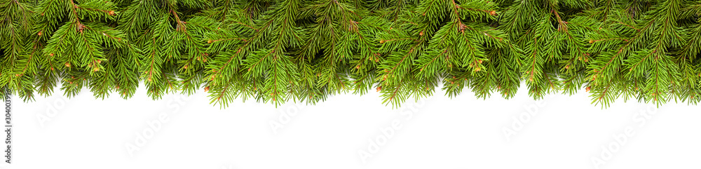 Fototapeta Christmas tree branches on white background as a border or template for christmas card