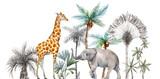 Akwarela safari zwierząt o składzie tropikalnych palm. Afrykańska żyrafa, słoń. - 304013528
