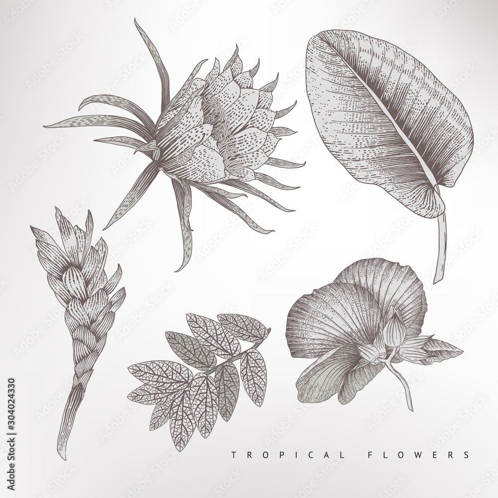 Fototapety, obrazy: Tropical flowers and leaves, vector illustratoin. Botanical art.  Engraving style