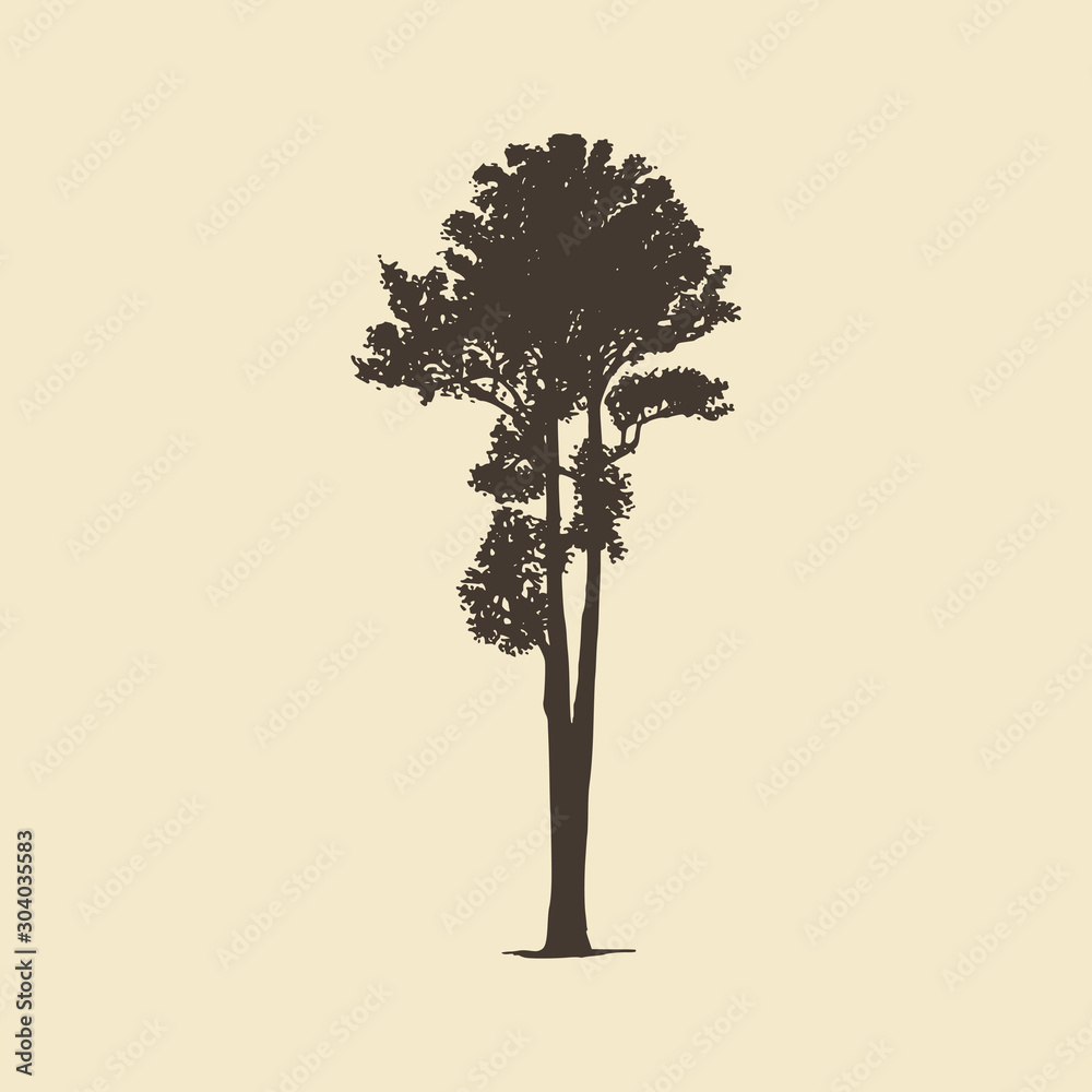 Fototapety, obrazy: Ash, hand drawn silhouette. Vector sketch of deciduous or coniferous tree.