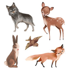 Cute hand drawn woodland watercolor animals set - deer, wolf, fox, bunny and bird