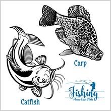 Catfish And Carp Fishing On Us...