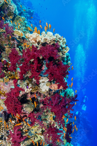 Fototapety, obrazy: Coral Reef at the Red Sea, Egypt