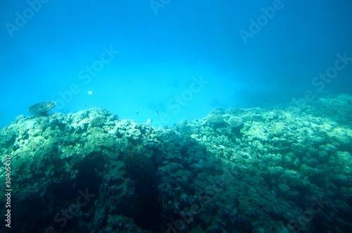 Fototapeta Fonds sous-marins de la Mer Rouge ( Hurghada -Égypte)