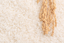 Raw White Polished Milled Edible Rice Crop On White Background In Brown Bowl, Organic Agriculture Design Concept. Staple Food Of Asia, Close Up.