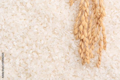 Fototapeta Raw white polished milled edible rice crop on white background in brown bowl, organic agriculture design concept