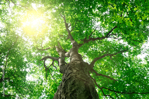Foto auf AluDibond Grun forest trees. nature green wood sunlight backgrounds