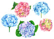 canvas print picture Set hydrangea on isolated white background, watercolor illustration, hand drawing, bouquet of delicate flowers