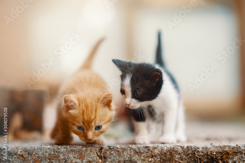 Obraz Beautiful Ginger Kitten Exploring the World - fototapety do salonu