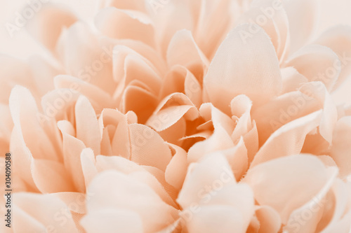Photo Sweet color flower made and blur style for background