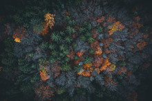 Aerial View Of Autumn Forest I...