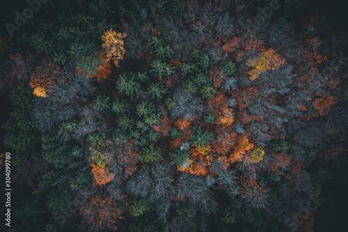 Fotografie, Obraz Aerial view of autumn forest in austria