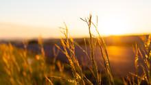 Early Morning Sunrise In Rural...