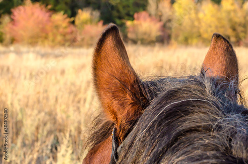 Photo ears and head of a horse against a landscape