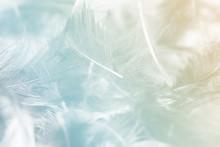 Blurred Pastel Feather Blur, P...