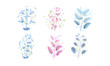 different flowers and branches on a white background in a watercolor style. Vector image