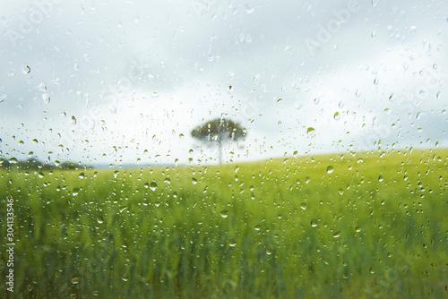 Fototapeta arbol desenfocado en dia lluvioso