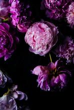 Close Up Of Peony Flowers