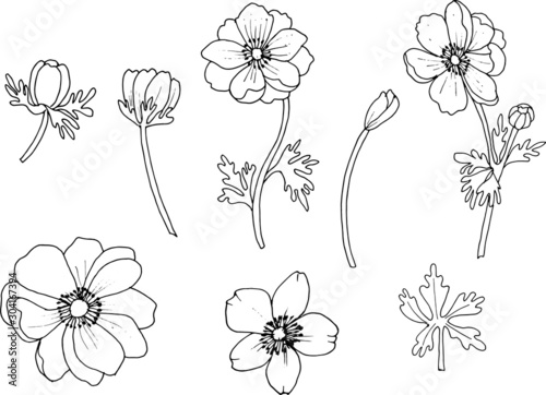 Set of anemone flowers isolated on a white background Wallpaper Mural