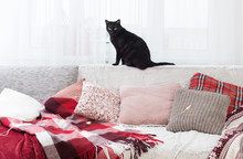 Black Cat On Sofa With Pillows And Plaids