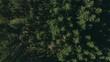 Schneller Flug über einen grünen Wald mit langen, geraden Schatten mit einer Drohne