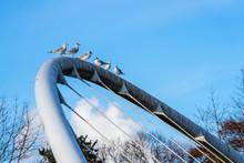 Seagulls On Top Of Bridge