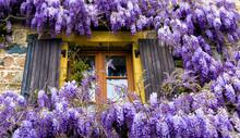 Countryside Window Wisteria Fl...