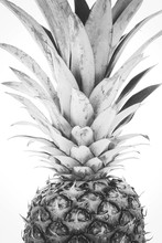 Trendy Home Interior Decoration Canvas - Single Ripe And Whole Pineapple Isolated On A White Background (black And White Vintage Effect)