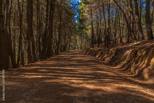 Canvas Prints Road in forest Sigue tu camino