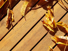 Autumn Wisteria Leaves On A Wo...
