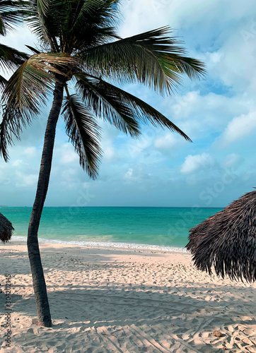 Motiv-Rollo Basic - Palm Beach (von ChrisF)