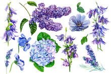 Set Of Purple Flowers On Isolated Background, Hydrangea, Anemone, Lilac, Lavender, Pansies, Bells, Watercolor Painting