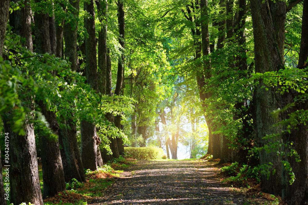 Fototapeta Summer landscape. Alley through tall green trees in a city park. Bright sunshine and blue sky. Riga, Latvia