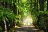 Fototapeta Fototapety na ścianę - Summer landscape. Alley through tall green trees in a city park. Bright sunshine and blue sky. Riga, Latvia
