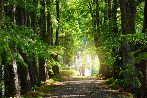 Summer landscape. Alley through tall green trees in a city park. Bright sunshine and blue sky. Riga, Latvia
