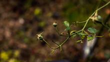 Flowerless Plant