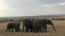 A Herd Of Elephants Eating Dried Grass In The Masai Mara, Kenya With Beautiful Sun Rays In The Background - Wide Shot