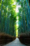 Fototapeta Na drzwi - Bamboo Grove Road in Arashiyama. Ukyo-ku, Kyoto City, Kyoto, Japan